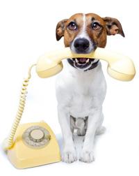 contactdog