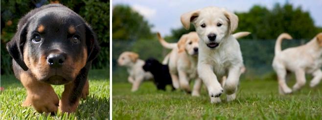 puppy socialising