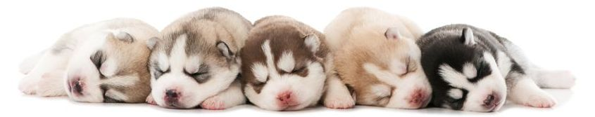 pups sleeping 2